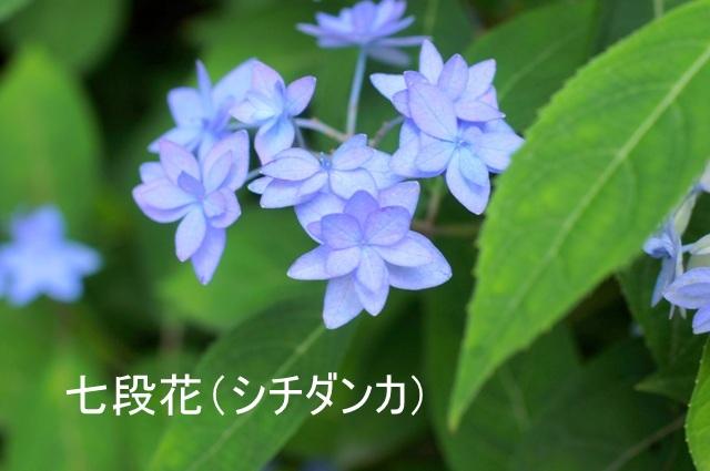 3DSC9467.JPG